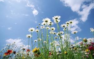 Flowers-Sky-Glade